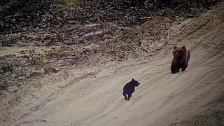 A Stray Dog and His Bear Friend Go on Adventure - Video