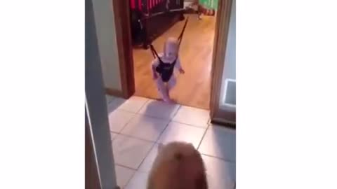A dog jumped up excited to see the baby