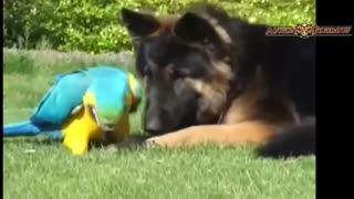 Top 10 Unbelievable Unlikely Animal Friendships Compilation - Video
