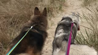 Huskies enjoy first time to the beach