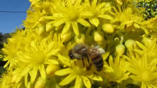 Busy as a bee - Video