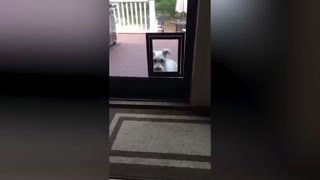 Not Again! Do Dogs Really Can't See Glass? - Video