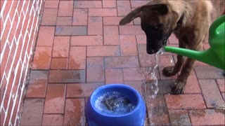Puppy is crazy about water
