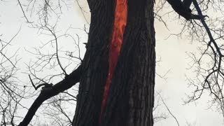 Tree Fire in Defiance, OH - Video