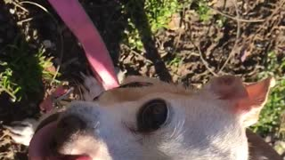 Hey beautiful day   my dog - Video