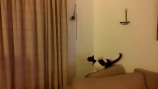 This Cat Just Grossly Miscalculated! - Video