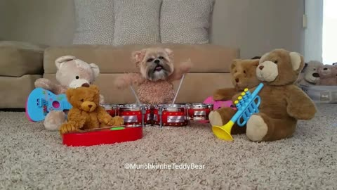 Munchkin the Teddy Bear play drums, forms rock band