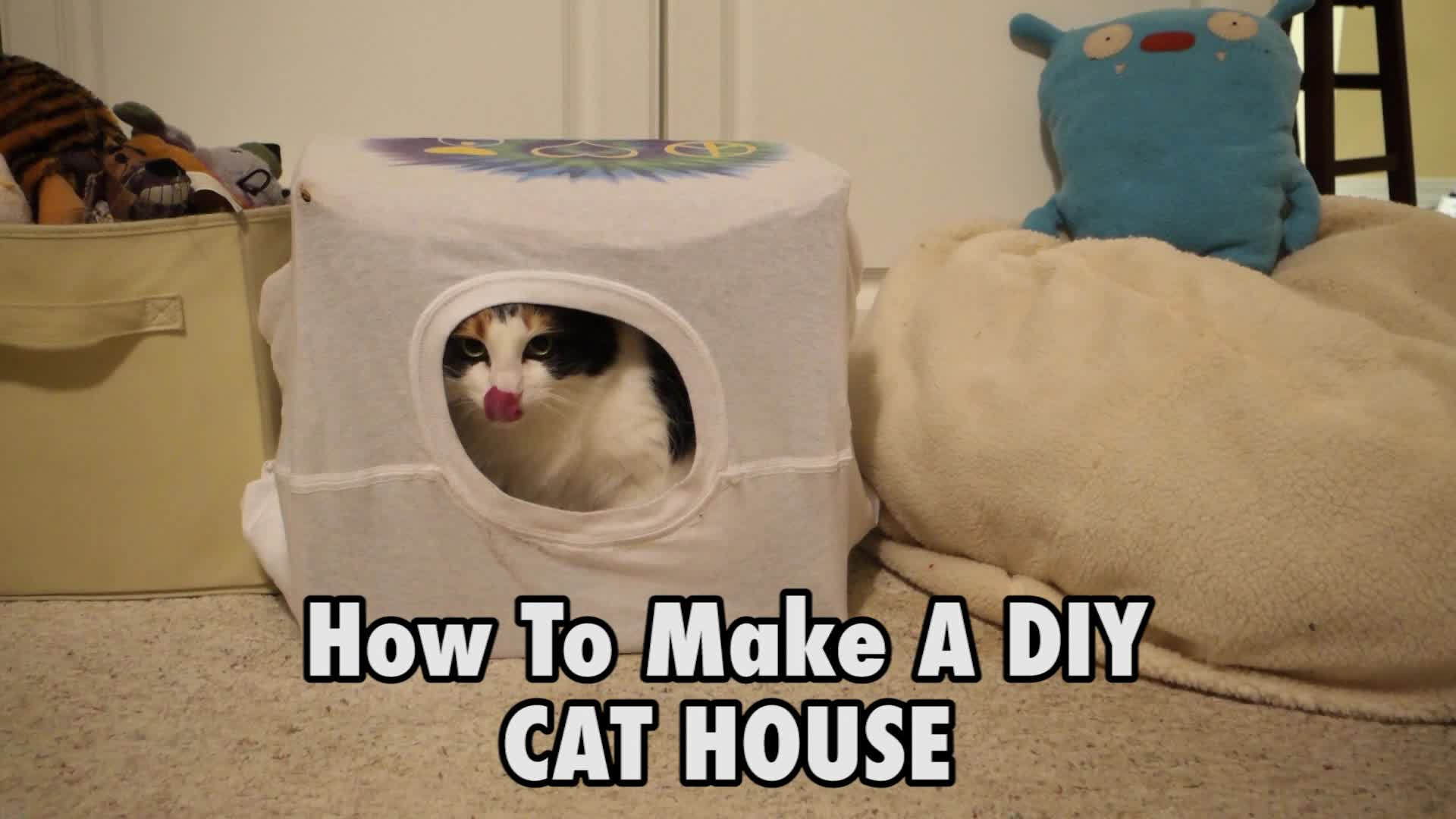 how to domesticate a stray cat