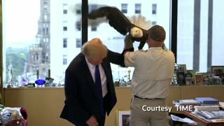Trump vs. Eagle - Video