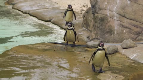 A group of cute penguins