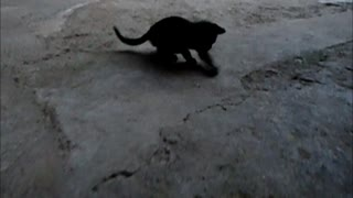 Cat playing football - Video
