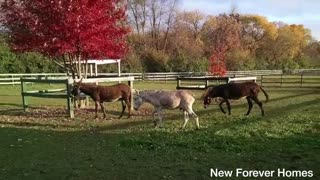 75 Horses are Given A Second Chance - Video