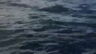 Humpback Whale Breaching in Dunsborough WA - Video