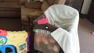 Toddlers playing peek-a-boo - Video