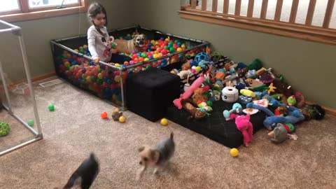 Happy dogs run and jump in homemade ball pit