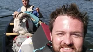 Goat enjoys scenic canoe ride in Alaska - Video