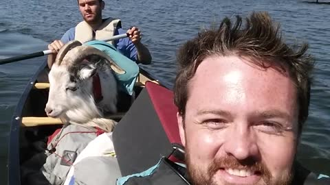 Goat enjoys scenic canoe ride in Alaska