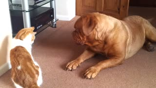 Dog and cat enjoy adorable play-fight - Video