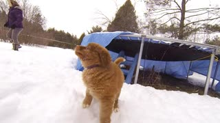 Puppy-time Play on a snowy day  - Video