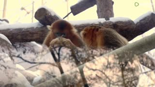 cute monkeys playing together