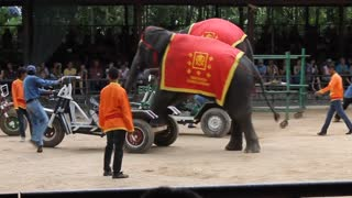 Baby Elephant driving Cycle in circus  - Video