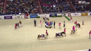 (VIDEO) Cute & Competitive – The Shetland Pony Race! - Video