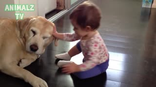 Cute Babies Playing With Labrador Dogs - Dogs Love Babies Compilation [HD VIDEO] - Video