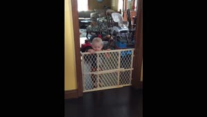 Cat jumps over baby gate while playing fetch - Video