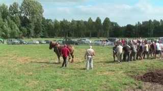 1 Horse Against 18 Men - Video