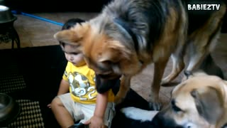 Big Dogs Playing with Babies Compilation 2016 - Video