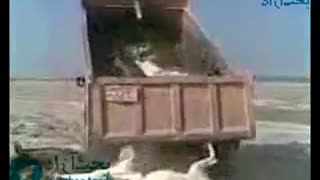 How to Unload a Truck Stacked full of Donkeys - Video