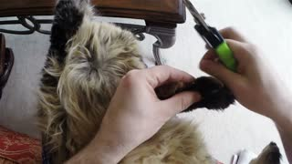 How to trim your cat's claws - Video