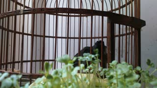 Hot of a bird in a cage - Video