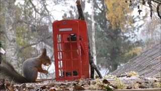 Making a telephone booth for squirrel photography - Video