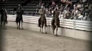 Show Horses *The Abuse UNCOVERED*
