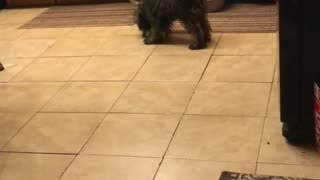 Playing puppy and toys