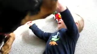 Cutest Baby And Rottweiler Dog Are Best Friends - Amazing