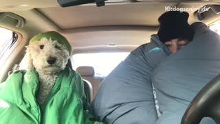 White dog wrapped around in green blanket in car with owner - Video