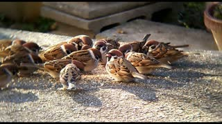Watch young birds eating up close with great music