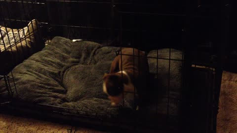 Silly puppy goes crazy in his bed