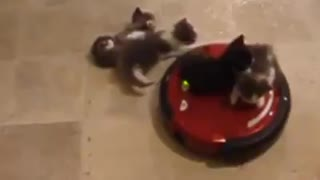 These kittens look like they're enjoying their ride - Video