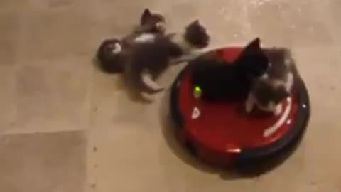These kittens look like they're enjoying their ride