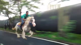 horse running on road v  fast  - Video