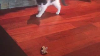 White kitty scared by toy car on side - Video
