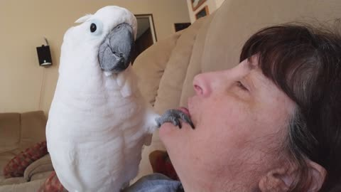 Onni The Baby Cockatoo Thinks He's a Dentist