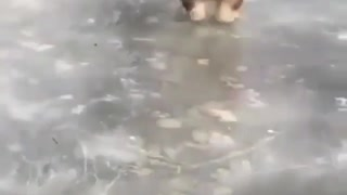 Crazy dog play on Ice land - Video