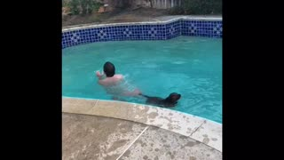Doggo Is Not Too Good At Pool Dives