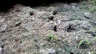 The Ants life - Video