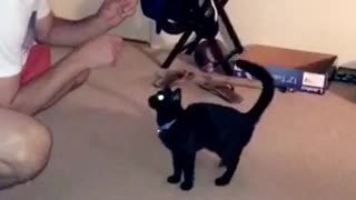 Black cat gives high five to guy in white shirt  - Video