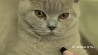 Learn What Does It Mean When A Cat Winks At You - Video